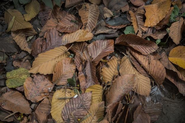 Trockene pflanze im dschungel