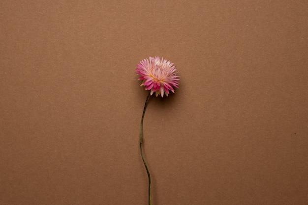 Trockene rosa blume auf einem hellbraunen.