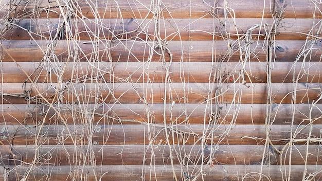 Trockene stängel einer kletterpflanze. nahaufnahme eines fragments einer alten holzwand, die von trockenem efeu bedeckt ist. abstraktes bild mit toten grauen weinpflanzen auf braunen planken eines fassadenhauses.