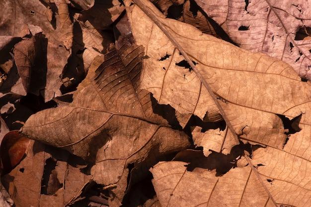 Trockene teakblätter auf dem waldboden