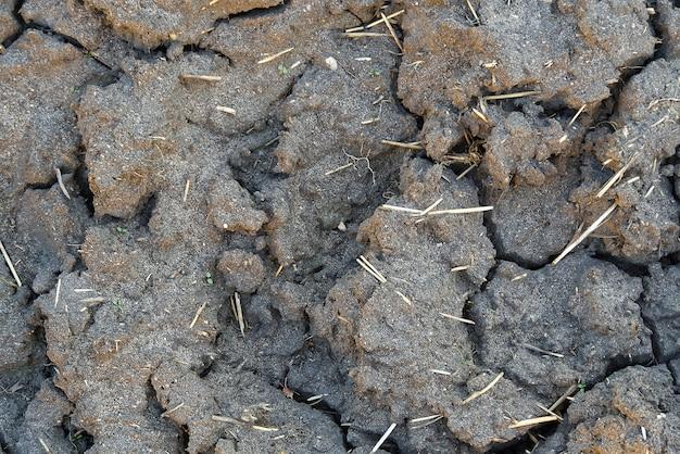 Trockene und rissige schmutzstruktur nach heißem und sonnigem tag.