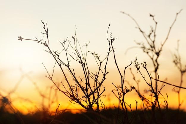Trockene zweige mit verheerendem lauffeuer als hintergrund. dämmerungsszene.