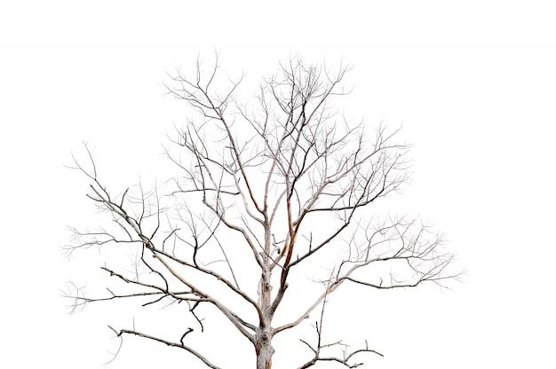 Trockene zweige, trockene bäume auf einem weißen hintergrundobjektkonzept