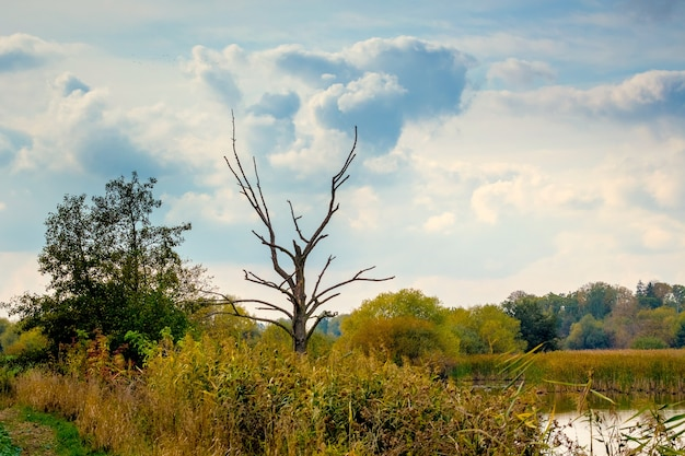 Trockener baum am uferfluss unter dichtem dickicht, malerischer himmel über dem fluss
