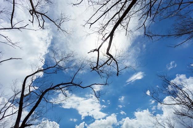 Trockener baum oder tote baumaste auf himmel und wolken