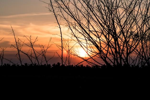 Trockener baum ohne blätter im winter gegen orange sonnenuntergangsonnenaufganghimmel schönen landschaftshintergrund