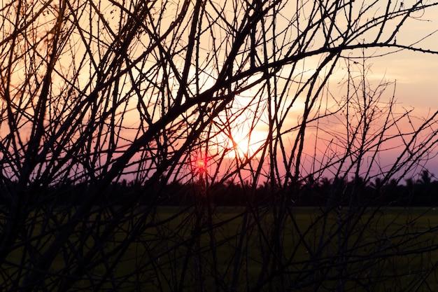 Trockener baum ohne blätter im winter gegen süßen sonnenuntergangsonnenaufganghimmel schönen landschaftshintergrund