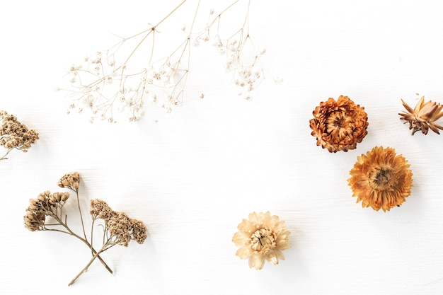 Trockener blütenzweig und knospen auf weiß