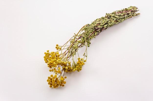 Trockener blumenstrauß tanacetum vulgare lokalisiert auf weißem hintergrund. heilpflanze, alternativmedizin