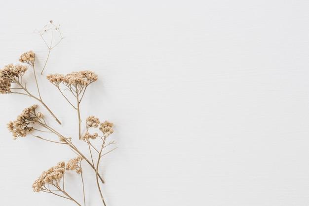 Trockener blumenzweig auf weiß