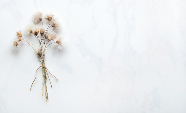 Trockener blumenzweig auf weißem hintergrund
