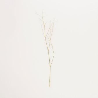 Trockener dünner pflanzenzweig