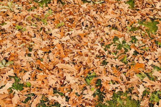 Trockener gefallener herbstlaub auf dem gras