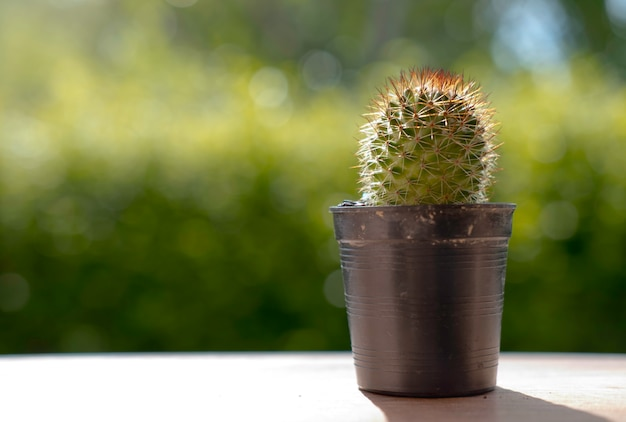 Trockener kaktus mit der natur und großer sonne falre