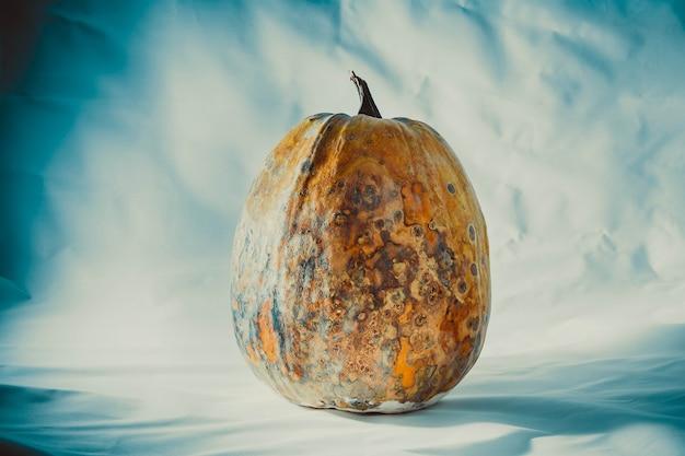 Trockener und fauler und getrockneter kürbis auf einem blauweißen hintergrund verdorbenes gemüse gefährliches essen