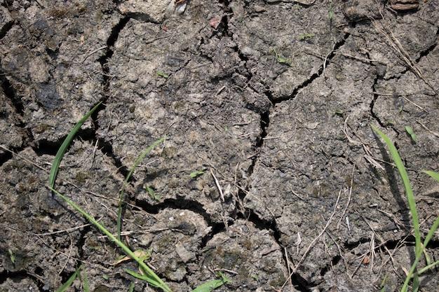 Trockener unfruchtbarer boden wächst in der landwirtschaft