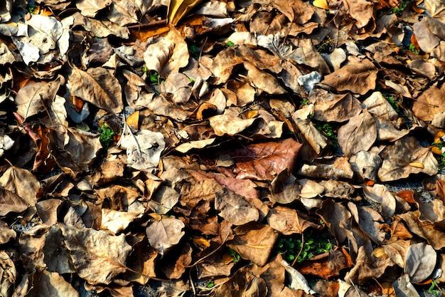 Trockener urlaub aus den grund getrocknete gefallene blätter im herbsthintergrund