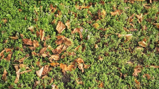 Trockener urlaub und grünes gras für textur und hintergrund.