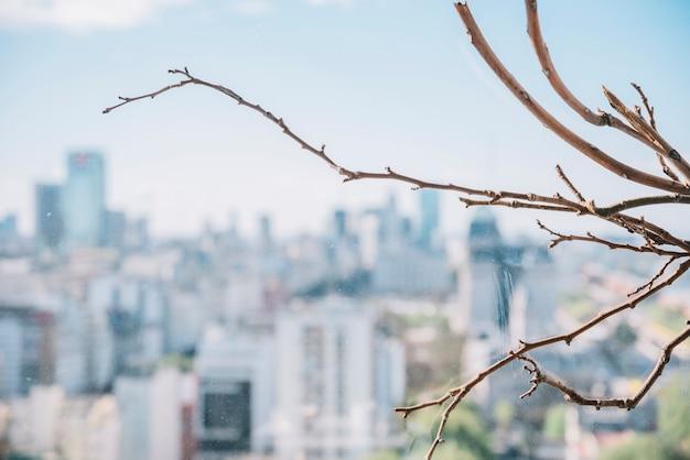 Trockener zweig auf der skyline der stadt