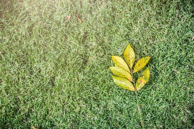 Trockenes blatt auf rasenhintergrund des grünen grases