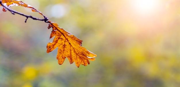 Trockenes braunes eichenblatt auf unscharfem hintergrund an einem sonnigen tag