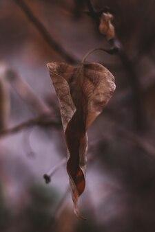 Trockenes braunes herbstblatt, das am baum hängt. herbststimmung und details der natur