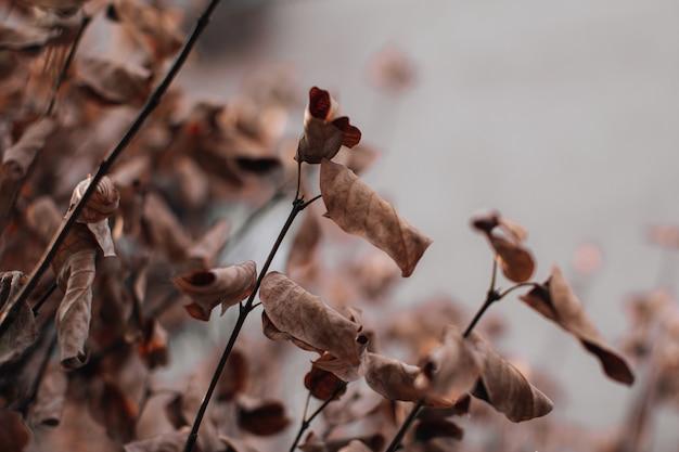 Trockenes braunes herbstlaub auf einem beige unscharfen hintergrund. herbststimmung und details der natur. platz kopieren