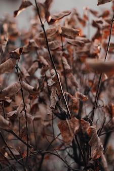 Trockenes braunes herbstlaub auf einem beige unscharfen hintergrund. herbststimmung und details der natur. vertikal