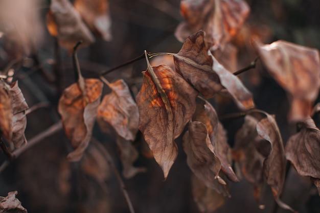 Trockenes braunes herbstlaub auf einem beige unscharfen hintergrund. herbststimmung und details der natur.