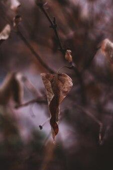 Trockenes braunes herbstlaub, das am baum hängt. herbststimmung und details der natur