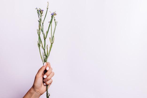 Trockenes bündel stämme ohne blumen in einer weiblichen hand mit einer maniküre auf einem hellen hintergrund