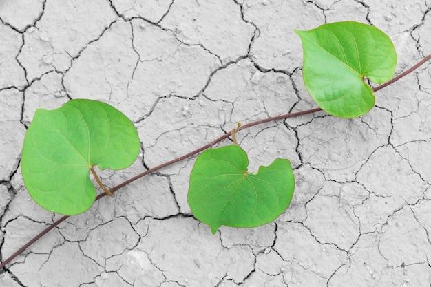 Trockenes gebrochenes land und grüne blätter