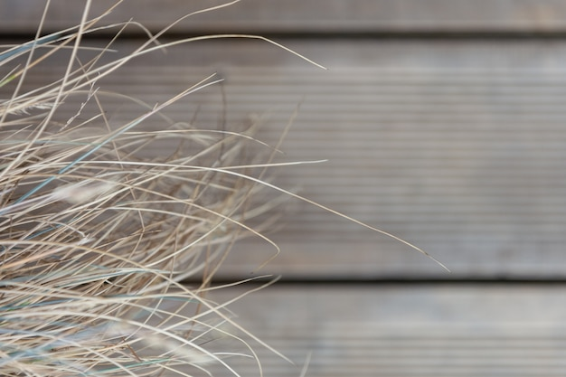 Trockenes gras auf dem hintergrund des bodens der hölzernen bretter.