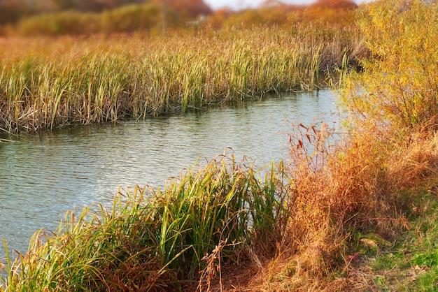 Trockenes gras der herbstlandschaft der flusslandschaft der fahne natürliches gras