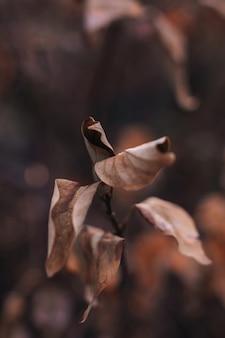 Trockenes herbstblatt, das an einer niederlassung hängt. herbststimmungskonzept im detail der natur