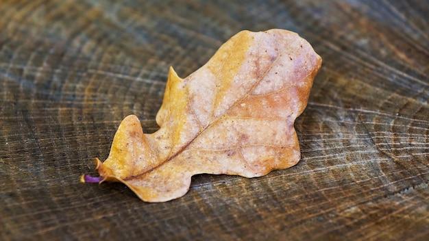 Trockenes herbstblatt der eiche auf dem baumstumpf im wald