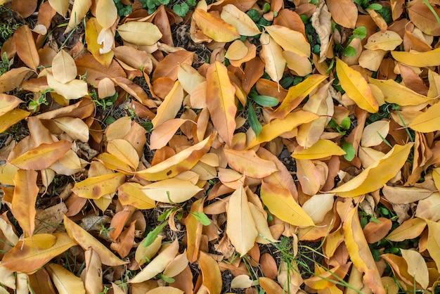 Trockenes herbstlaub auf dem gras an einem kalten oktobertag. textur. hintergrund.