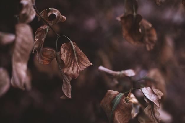Trockenes herbstlaub, das an einem ast hängt. herbststimmungskonzept im detail der natur