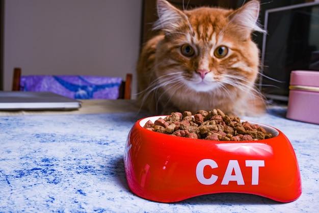Trockenes katzenfutter in einer roten schüssel mit der aufschrift katze. katze frisst trockenfutter aus einer schüssel