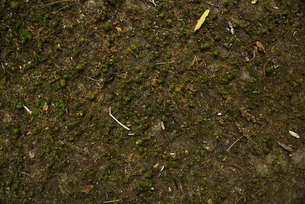 Trockenes moos auf stein in der naturbeschaffenheit und -hintergrund