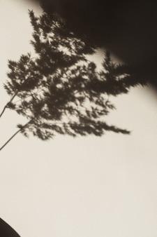 Trockenes pampasgrasrohr. schatten an der wand. silhouette im sonnenlicht