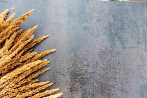 Trockenes schilf und ein dünner anmutiger zweig auf einem schwarzen strukturierten hintergrund. goldenes schilfgras. abstrakter natürlicher hintergrund in neutralen monochromen farben. minimalistisches, trendiges konzept. platz kopieren.