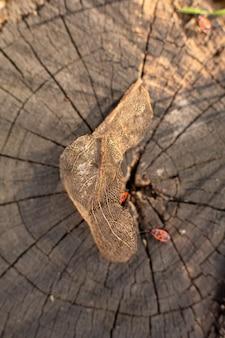 Trockenes skelettiertes blatt auf einem stumpf