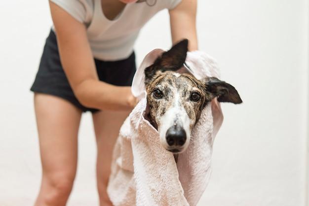 Trocknen sie den hund mit einem handtuch