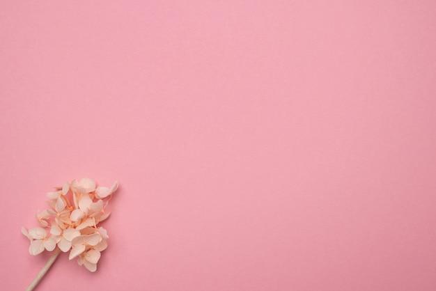 Trocknen sie zarte blumen auf einer rosa papieroberfläche