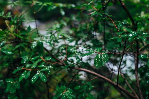 Tröpfchen auf den grünen blättern eines baumes