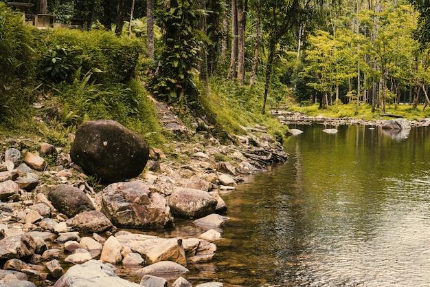 Tropenwald und fluss