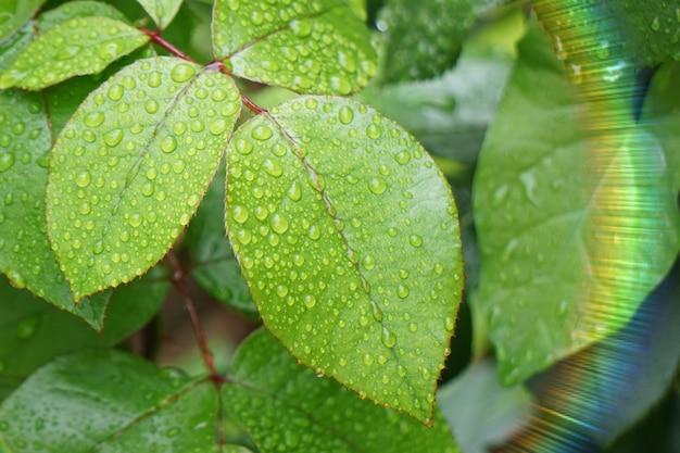 Tropfen auf den grünen pflanzenblättern in der natur im sommer