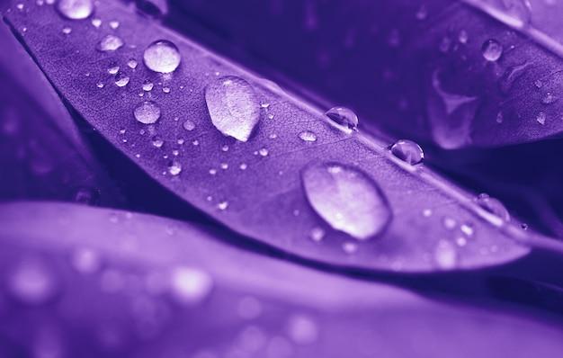Tropfen des transparenten regenwassers auf blattabschluß oben. schöne natur. getonter effekt