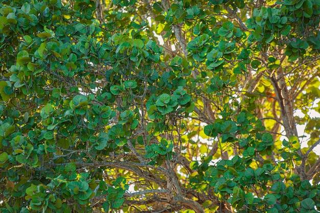 Tropical foliage texture bei sonnenuntergang in der dominikanischen republik